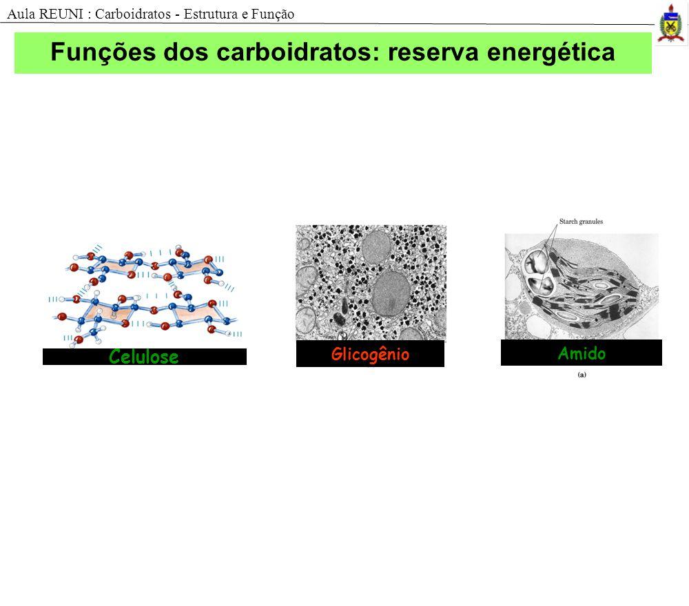 Amido Glicogênio Celulose Funções dos carboidratos: reserva energética Aula REUNI : Carboidratos - Estrutura e Função