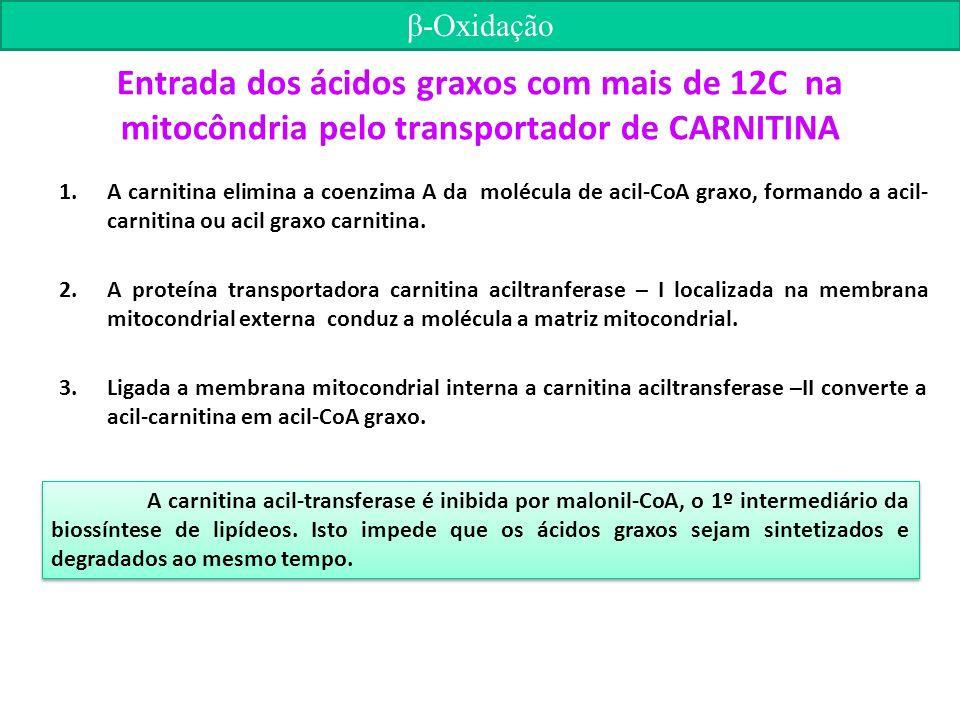 Entrada dos ácidos graxos com mais de 12C na mitocôndria pelo transportador de CARNITINA 1.A carnitina elimina a coenzima A da molécula de acil-CoA graxo, formando a acil- carnitina ou acil graxo carnitina.