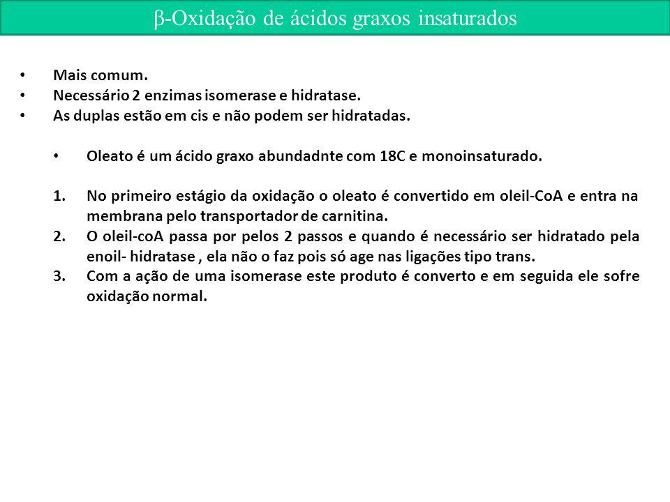 β-Oxidação de ácidos graxos insaturados Mais comum.