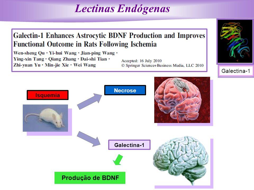 Galectina-1 Produção de BDNF Isquemia Necrose Lectinas Endógenas