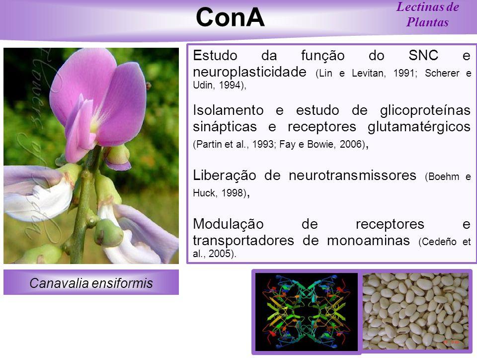 Canavalia ensiformis Lectinas de Plantas ConA Estudo da função do SNC e neuroplasticidade (Lin e Levitan, 1991; Scherer e Udin, 1994), Isolamento e es