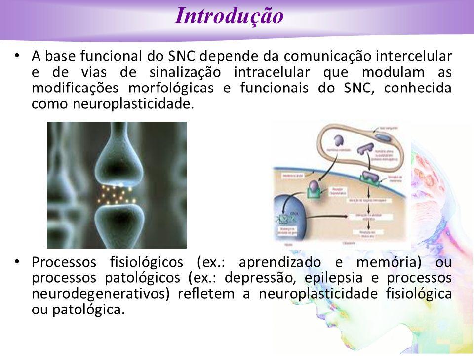 Introdução A base funcional do SNC depende da comunicação intercelular e de vias de sinalização intracelular que modulam as modificações morfológicas