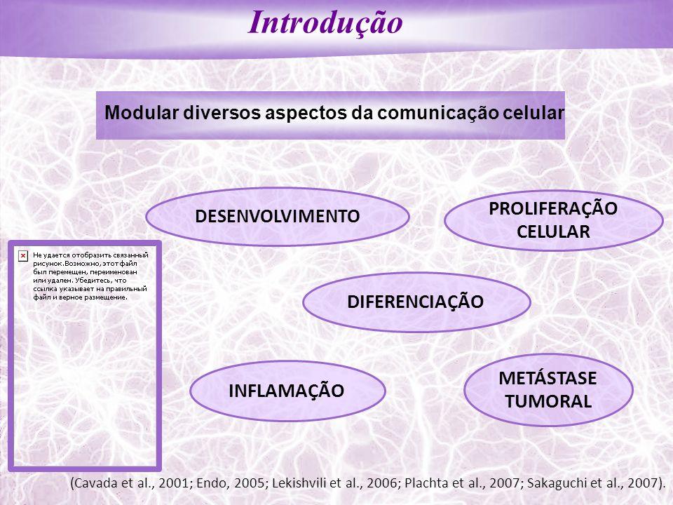 DESENVOLVIMENTO DIFERENCIAÇÃO (Cavada et al., 2001; Endo, 2005; Lekishvili et al., 2006; Plachta et al., 2007; Sakaguchi et al., 2007). INFLAMAÇÃO MET