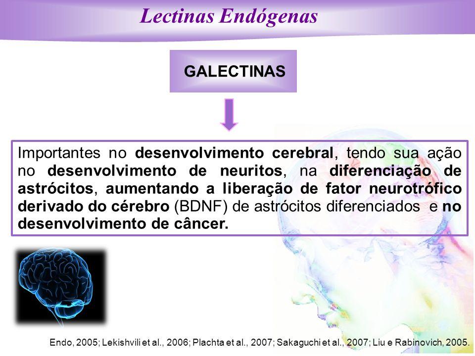 Lectinas Endógenas GALECTINAS Importantes no desenvolvimento cerebral, tendo sua ação no desenvolvimento de neuritos, na diferenciação de astrócitos,