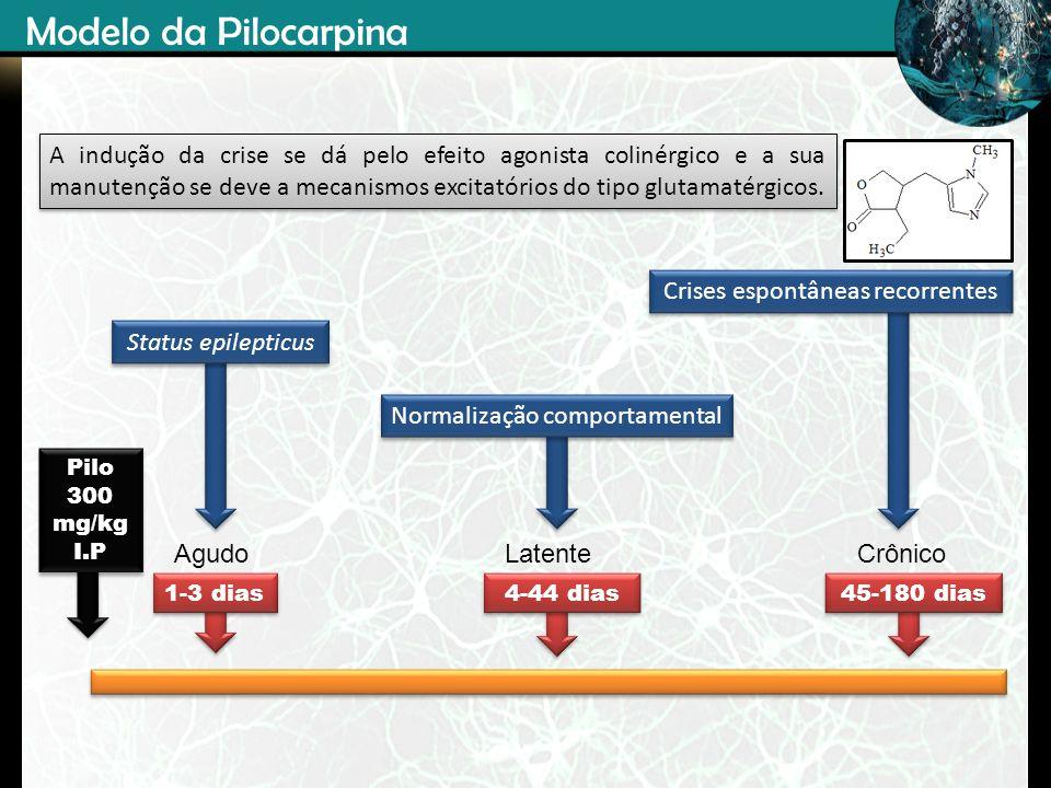 Pilo 300 mg/kg I.P Pilo 300 mg/kg I.P 45-180 dias 1-3 dias 4-44 dias AgudoCrônicoLatente Status epilepticus Normalização comportamental Crises espontâ