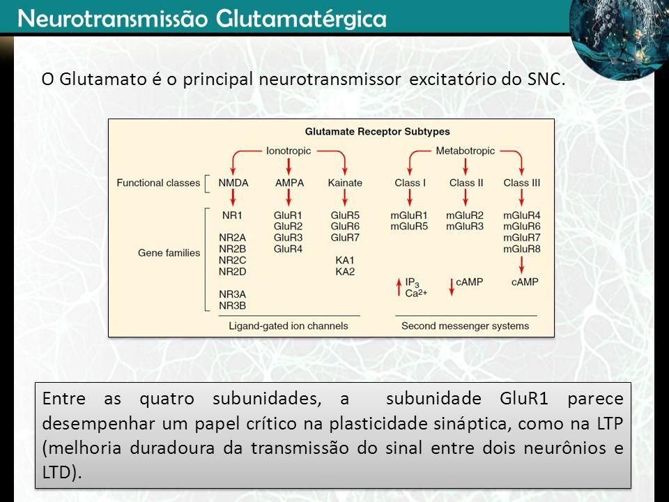 O Glutamato é o principal neurotransmissor excitatório do SNC. Entre as quatro subunidades, a subunidade GluR1 parece desempenhar um papel crítico na