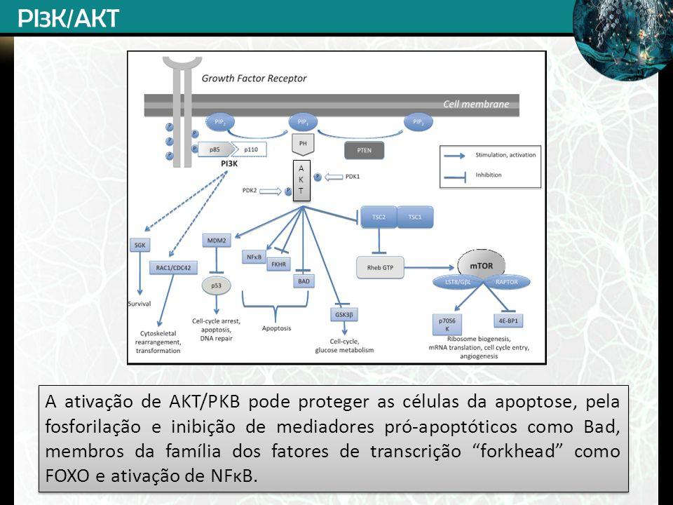A ativação de AKT/PKB pode proteger as células da apoptose, pela fosforilação e inibição de mediadores pró-apoptóticos como Bad, membros da família do