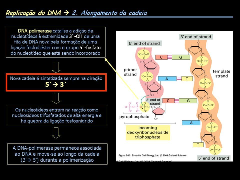 Replicação do DNA 2. Alongamento da cadeia DNA-polimerase catalisa a adição de nucleotídeos à extremidade 3`-OH de uma fita de DNA nova pela formação