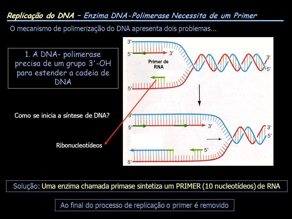 Replicação do DNA – Enzima DNA-Polimerase Necessita de um Primer O mecanismo de polimerização do DNA apresenta dois problemas... Solução: Uma enzima c