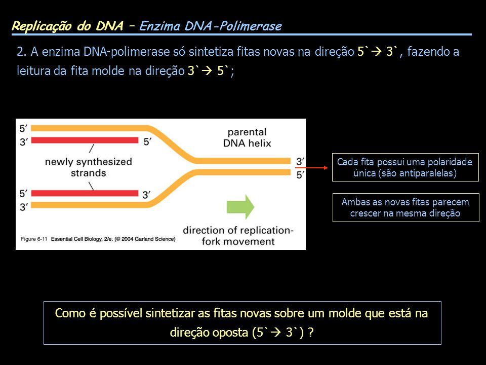 Como é possível sintetizar as fitas novas sobre um molde que está na direção oposta (5` 3`) ? Replicação do DNA – Enzima DNA-Polimerase 2. A enzima DN