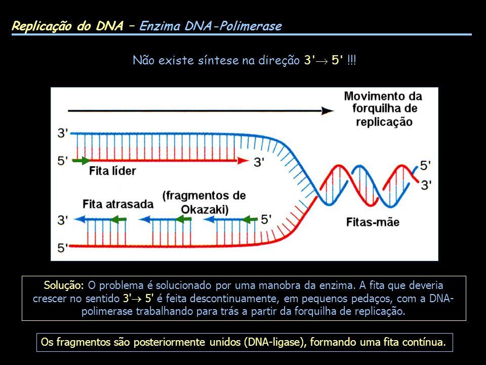 Replicação do DNA – Enzima DNA-Polimerase Não existe síntese na direção 3' 5' !!! Solução: O problema é solucionado por uma manobra da enzima. A fita