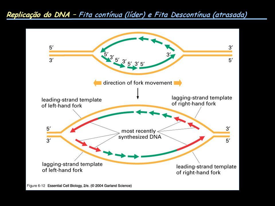 Replicação do DNA – Fita contínua (líder) e Fita Descontínua (atrasada)