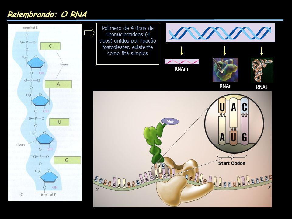 Relembrando: O RNA Polímero de 4 tipos de ribonucleotídeos (4 tipos) unidos por ligação fosfodiéster, existente como fita simples RNAm RNAr RNAt