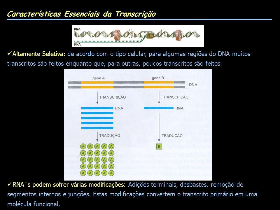 Características Essenciais da Transcrição Altamente Seletiva: de acordo com o tipo celular, para algumas regiões do DNA muitos transcritos são feitos