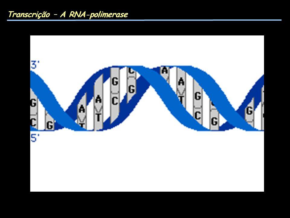 Transcrição – A RNA-polimerase