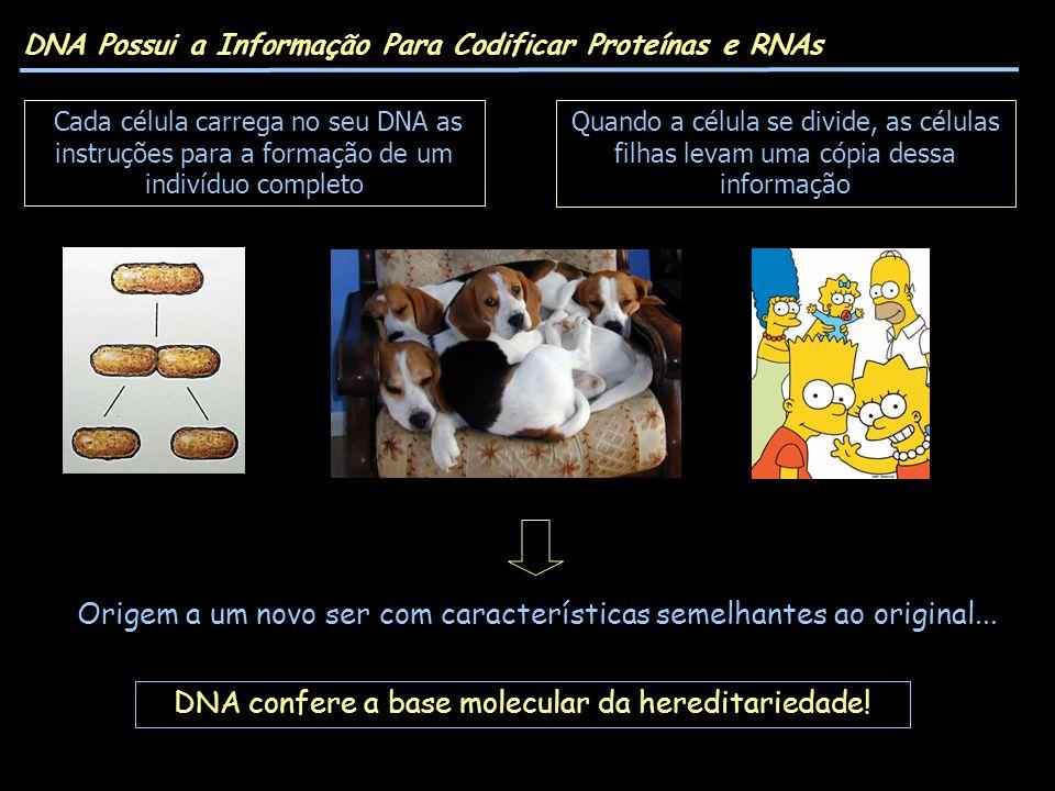 DNA Possui a Informação Para Codificar Proteínas e RNAs Origem a um novo ser com características semelhantes ao original... DNA confere a base molecul
