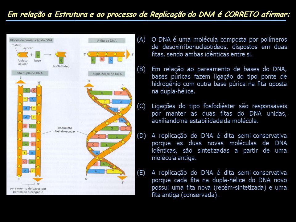 Em relação a Estrutura e ao processo de Replicação do DNA é CORRETO afirmar: (A)O DNA é uma molécula composta por polímeros de desoxirribonucleotídeos, dispostos em duas fitas, sendo ambas idênticas entre si.
