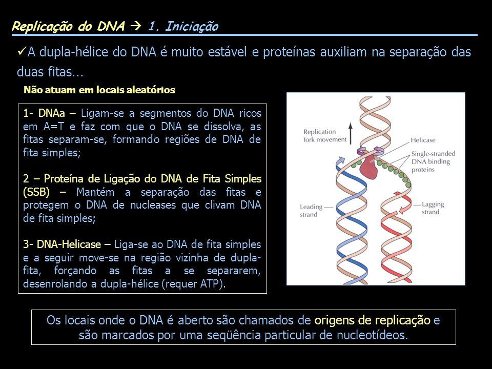 GLAST (EAAT1) GLT-1 (EAAT2) Replicação do DNA 1. Iniciação Os locais onde o DNA é aberto são chamados de origens de replicação e são marcados por uma
