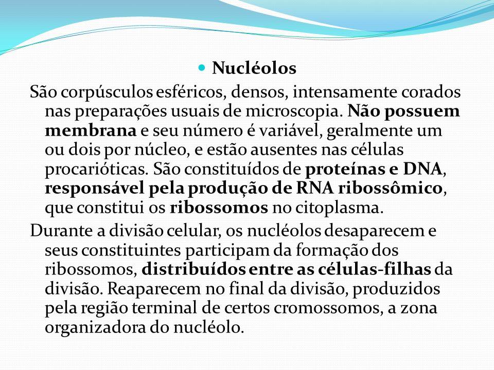 Nucléolos São corpúsculos esféricos, densos, intensamente corados nas preparações usuais de microscopia. Não possuem membrana e seu número é variável,