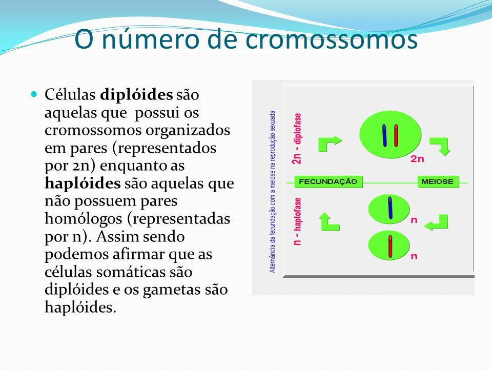 O número de cromossomos Células diplóides são aquelas que possui os cromossomos organizados em pares (representados por 2n) enquanto as haplóides são