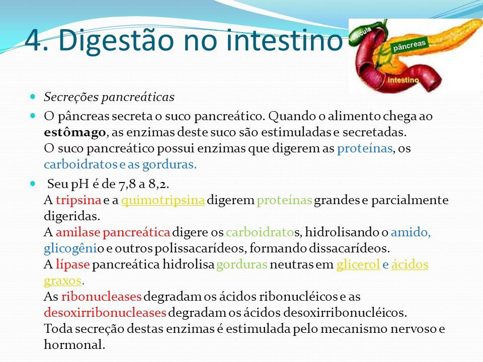 4. Digestão no intestino Secreções pancreáticas O pâncreas secreta o suco pancreático. Quando o alimento chega ao estômago, as enzimas deste suco são