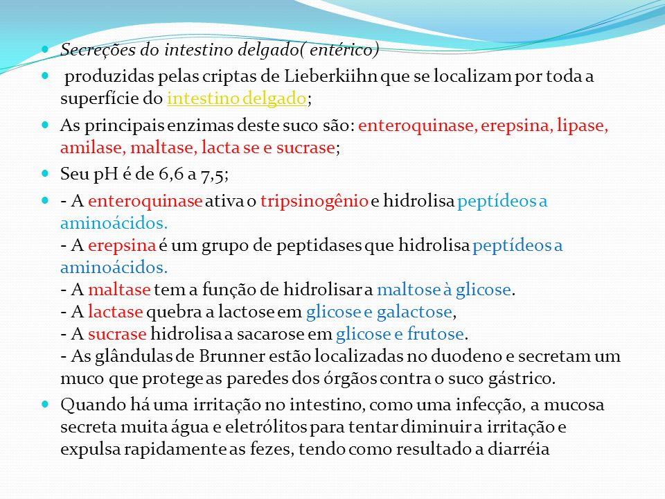 Secreções do intestino delgado( entérico) produzidas pelas criptas de Lieberkiihn que se localizam por toda a superfície do intestino delgado;intestin