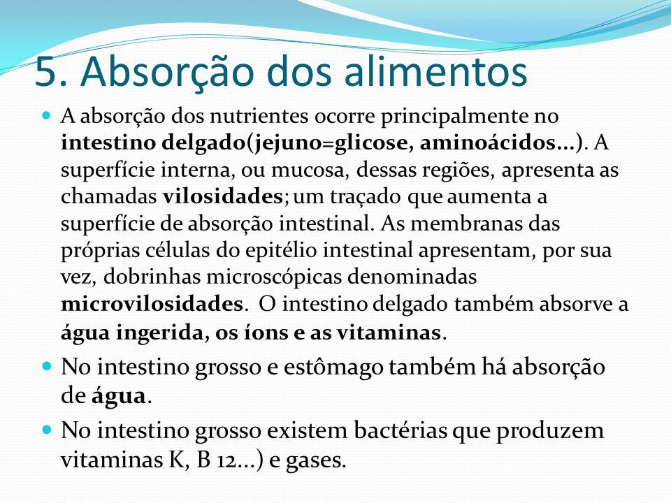 5. Absorção dos alimentos A absorção dos nutrientes ocorre principalmente no intestino delgado(jejuno=glicose, aminoácidos...). A superfície interna,