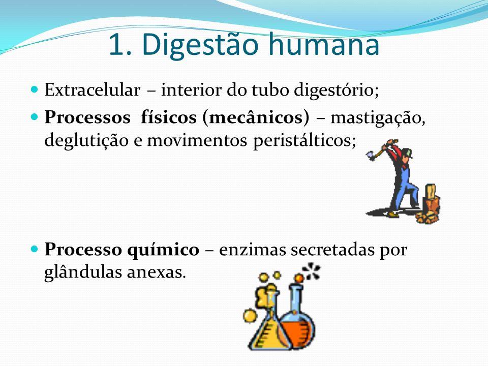 1. Digestão humana Extracelular – interior do tubo digestório; Processos físicos (mecânicos) – mastigação, deglutição e movimentos peristálticos; Proc