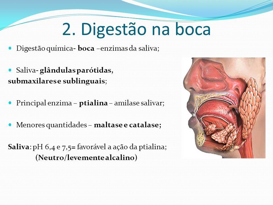 2. Digestão na boca Digestão química- boca –enzimas da saliva; Saliva- glândulas parótidas, submaxilares e sublinguais; Principal enzima – ptialina –