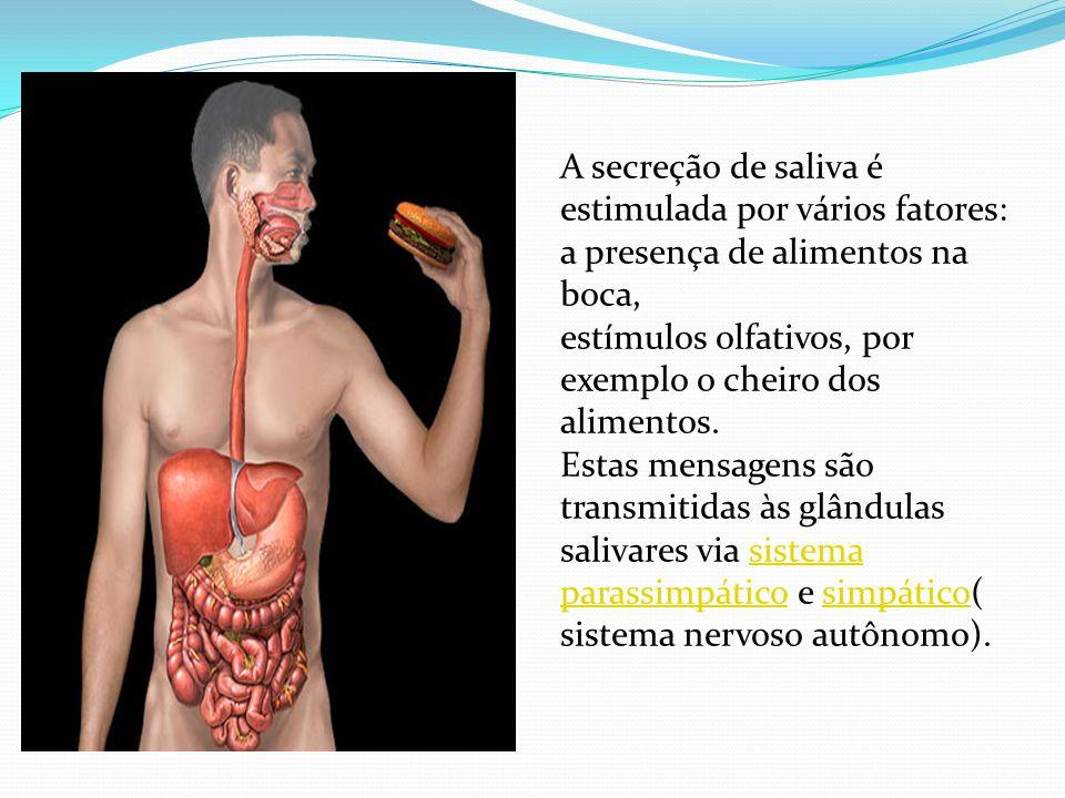 A secreção de saliva é estimulada por vários fatores: a presença de alimentos na boca, estímulos olfativos, por exemplo o cheiro dos alimentos. Estas