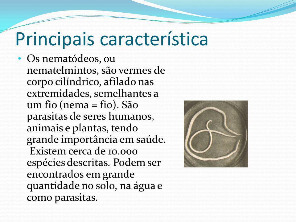 Principais característica Os nematódeos, ou nematelmintos, são vermes de corpo cilíndrico, afilado nas extremidades, semelhantes a um fio (nema = fio).