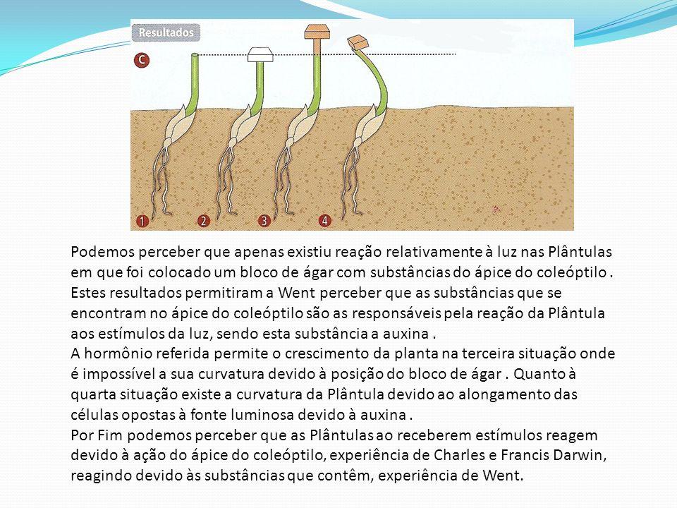 Podemos perceber que apenas existiu reação relativamente à luz nas Plântulas em que foi colocado um bloco de ágar com substâncias do ápice do coleópti