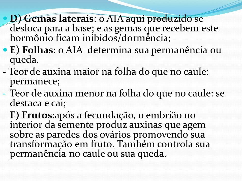 D) Gemas laterais: o AIA aqui produzido se desloca para a base; e as gemas que recebem este hormônio ficam inibidos/dormência; E) Folhas: o AIA determ