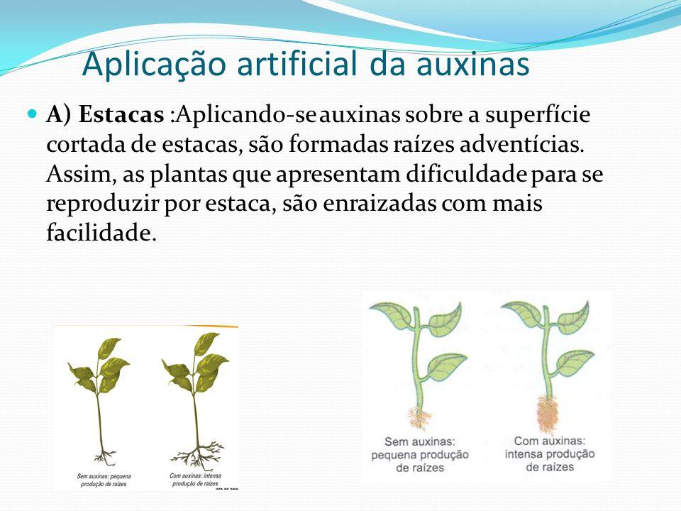 Aplicação artificial da auxinas A) Estacas :Aplicando-se auxinas sobre a superfície cortada de estacas, são formadas raízes adventícias. Assim, as pla