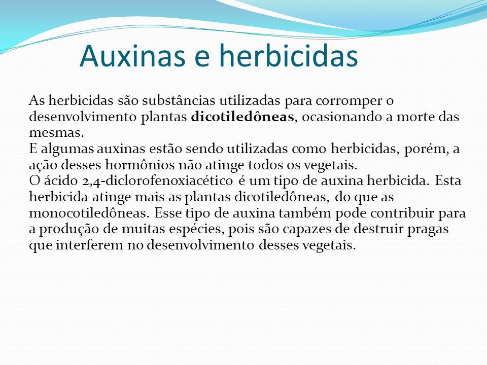 Auxinas e herbicidas As herbicidas são substâncias utilizadas para corromper o desenvolvimento plantas dicotiledôneas, ocasionando a morte das mesmas.