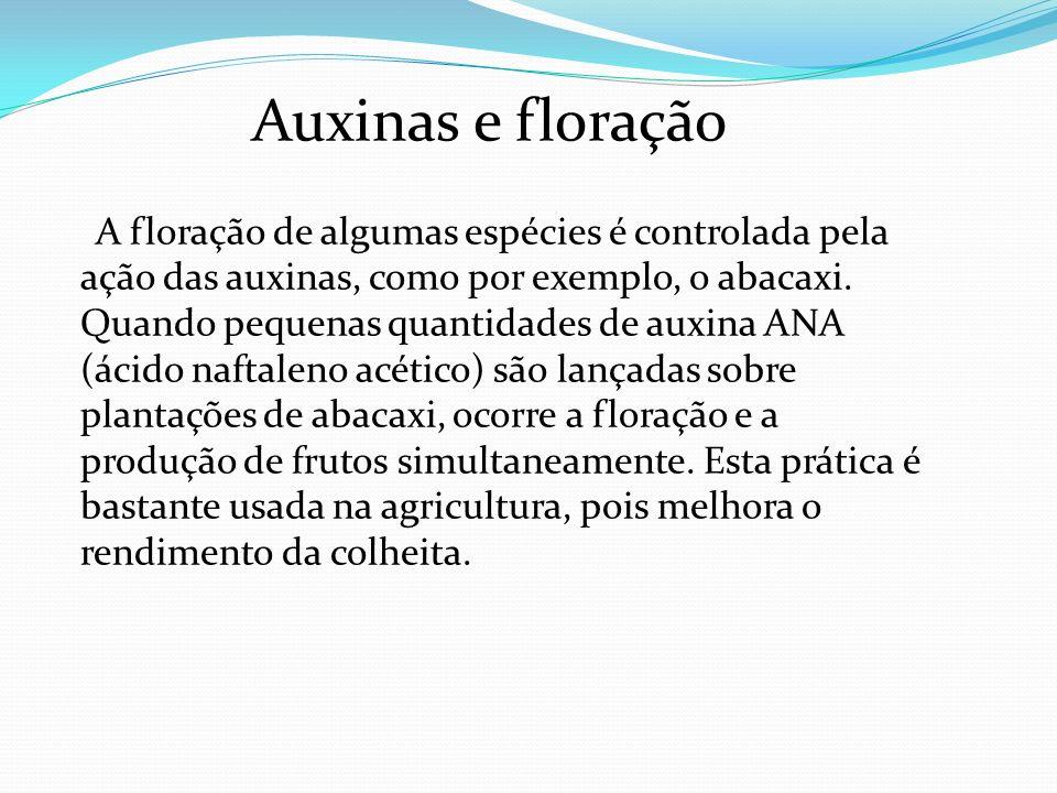 Auxinas e floração A floração de algumas espécies é controlada pela ação das auxinas, como por exemplo, o abacaxi. Quando pequenas quantidades de auxi