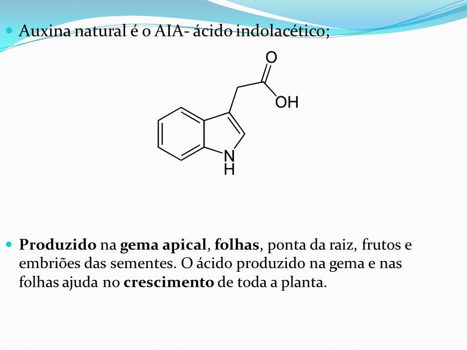 Auxina natural é o AIA- ácido indolacético; Produzido na gema apical, folhas, ponta da raiz, frutos e embriões das sementes. O ácido produzido na gema