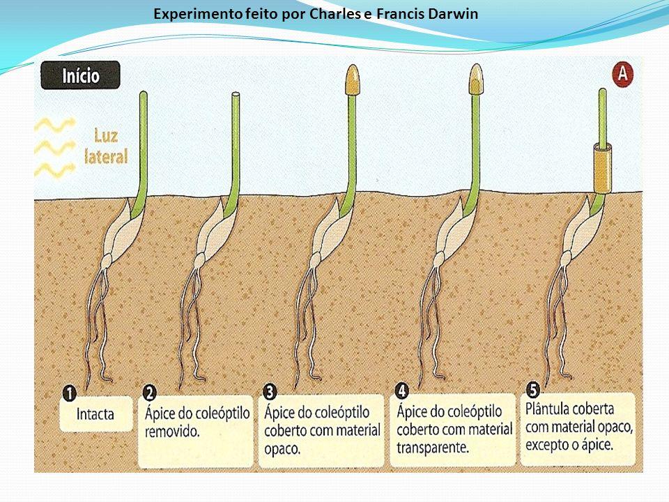 Experimento feito por Charles e Francis Darwin