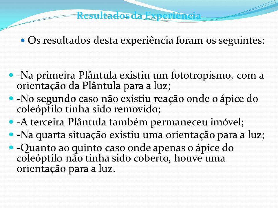 Resultados da Experiência Os resultados desta experiência foram os seguintes: -Na primeira Plântula existiu um fototropismo, com a orientação da Plânt