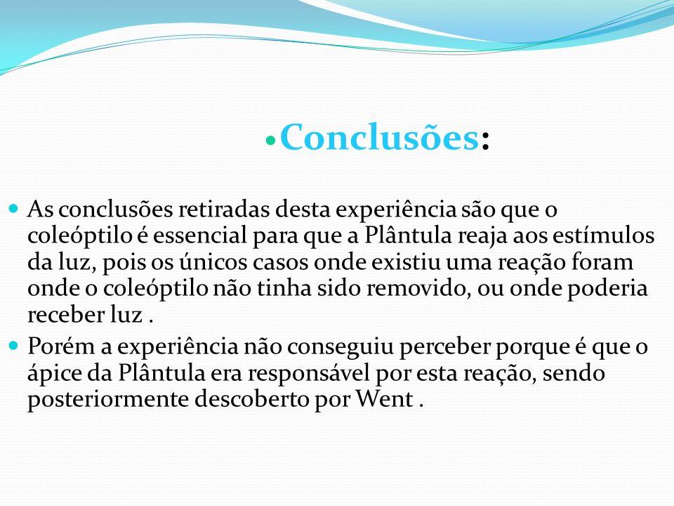 Conclusões: As conclusões retiradas desta experiência são que o coleóptilo é essencial para que a Plântula reaja aos estímulos da luz, pois os únicos