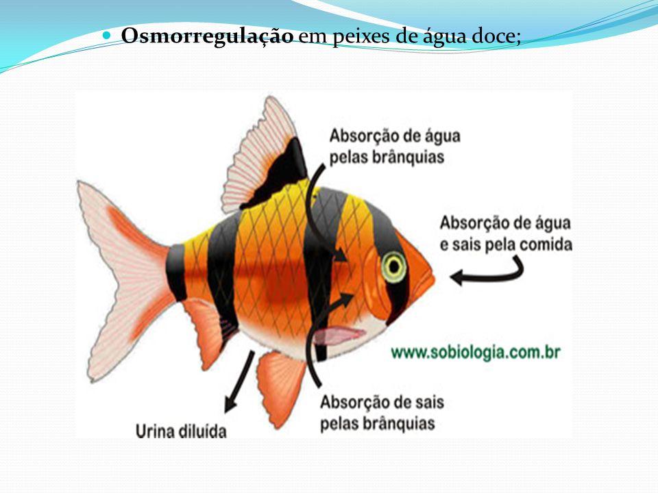 Já animais marinhos como tubarões e outros peixes cartilaginosos (raias, cações, quimeras etc.) tem teor salino menor do que a água do mar.