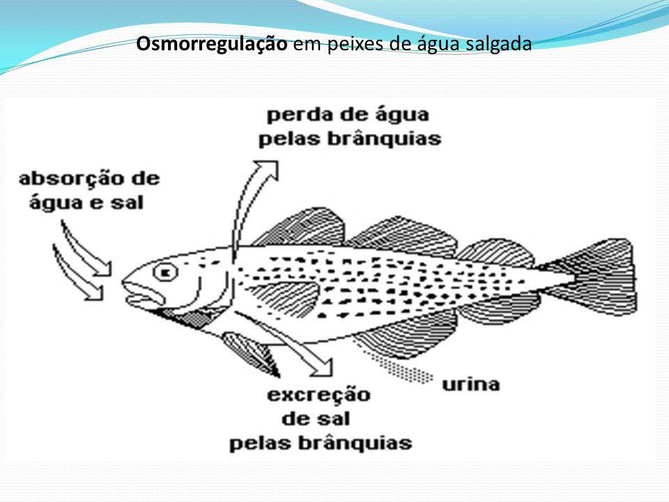 Osmorregulação em peixes de água salgada