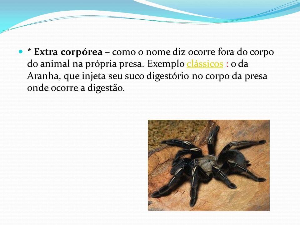 * Extra corpórea – como o nome diz ocorre fora do corpo do animal na própria presa. Exemplo clássicos : o da Aranha, que injeta seu suco digestório no