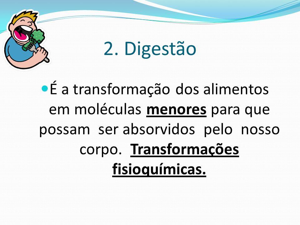 2. Digestão É a transformação dos alimentos em moléculas menores para que possam ser absorvidos pelo nosso corpo. Transformações fisioquímicas.