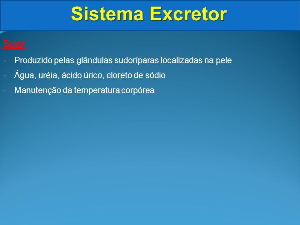 Sistema Excretor Suor -Produzido pelas glândulas sudoríparas localizadas na pele -Água, uréia, ácido úrico, cloreto de sódio -Manutenção da temperatura corpórea