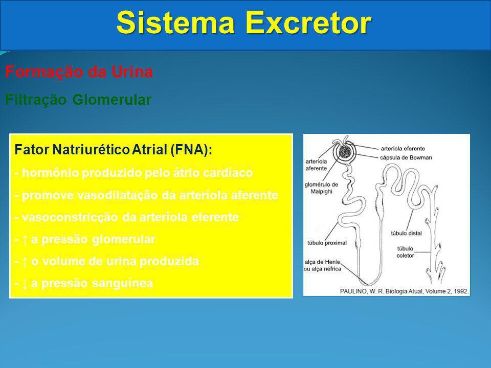 Sistema Excretor Formação da Urina Filtração Glomerular Fator Natriurético Atrial (FNA): - hormônio produzido pelo átrio cardíaco - promove vasodilatação da arteríola aferente - vasoconstricção da arteríola eferente - a pressão glomerular - o volume de urina produzida - a pressão sanguínea