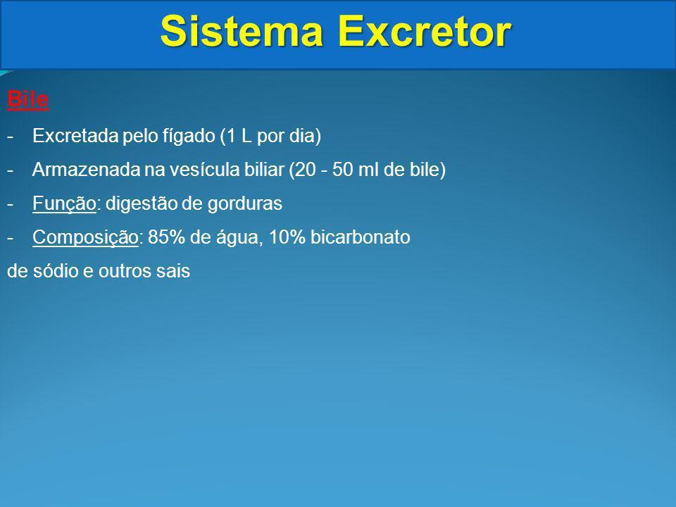 Sistema Excretor Bile -Excretada pelo fígado (1 L por dia) -Armazenada na vesícula biliar (20 - 50 ml de bile) -Função: digestão de gorduras -Composição: 85% de água, 10% bicarbonato de sódio e outros sais