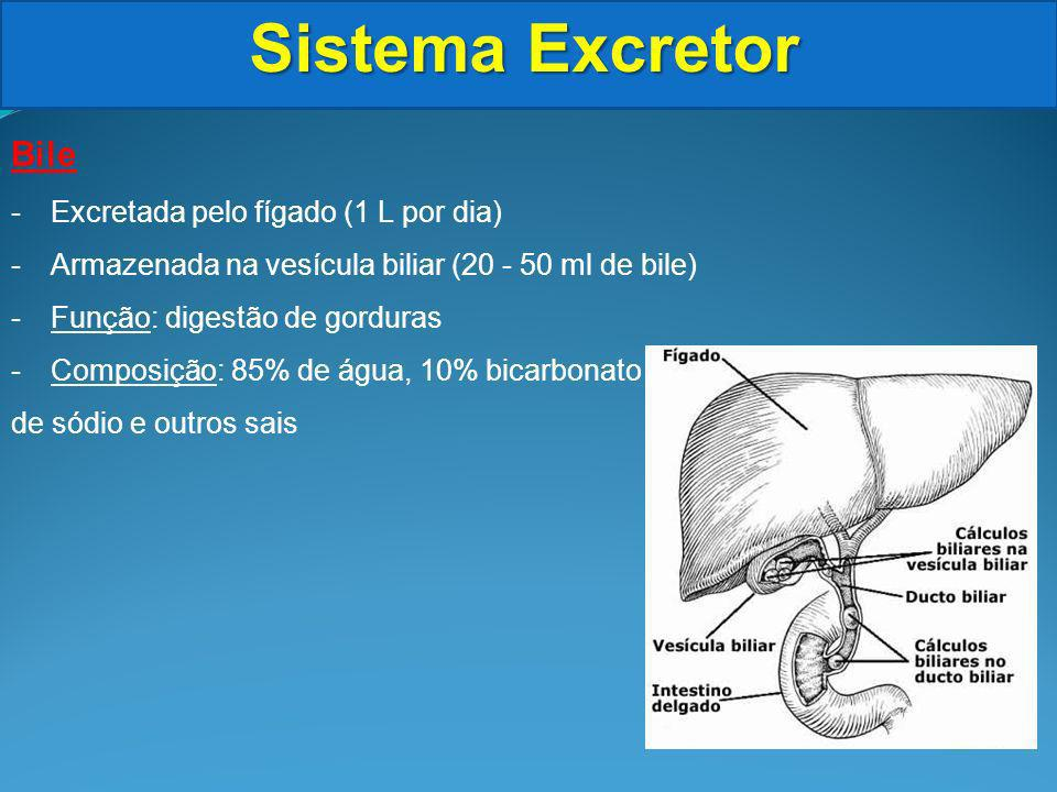 Sistema Excretor Cálculo Renal -pedras nos rins -Formações sólidas de sais (oxalato de cálcio e ácido úrico) -Se formam nos rins ou na bexiga -À medida que crescem a dor aparece