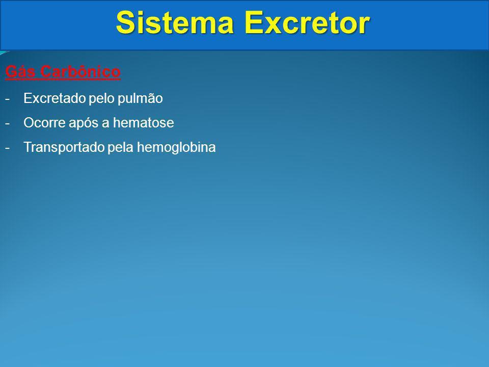 Sistema Excretor Formação da Urina Reabsorção -Permeabilidade das paredes do túbulo distal e ducto coletor depende do ADH: hormônio antidiurético (vasopressina)