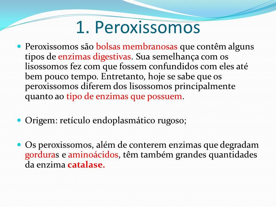1. Peroxissomos Peroxissomos são bolsas membranosas que contêm alguns tipos de enzimas digestivas. Sua semelhança com os lisossomos fez com que fossem